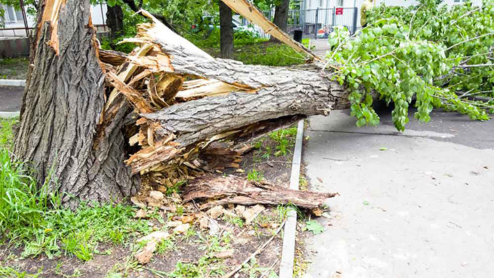 residential-debris-removal-insurance